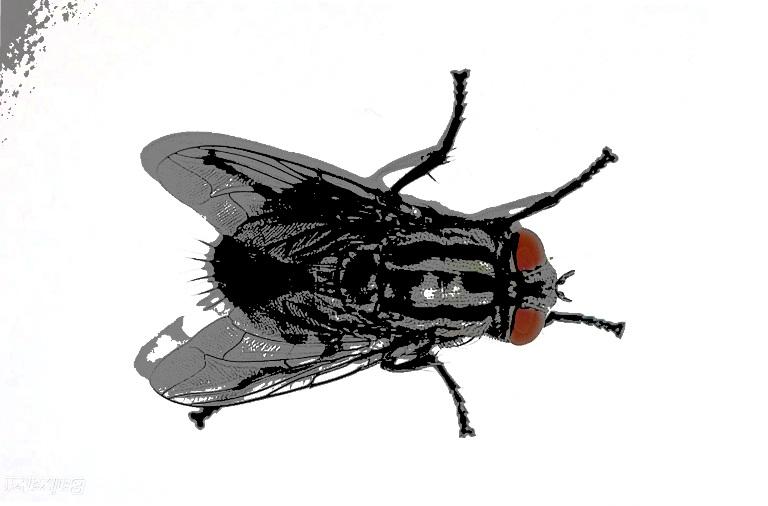 Diálogo con el colectivo El Río Sin Orillas: Otra vez moscas - Andén 65